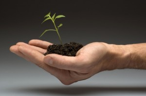 Vivero de Empresas: Una salida para el Emprendedor